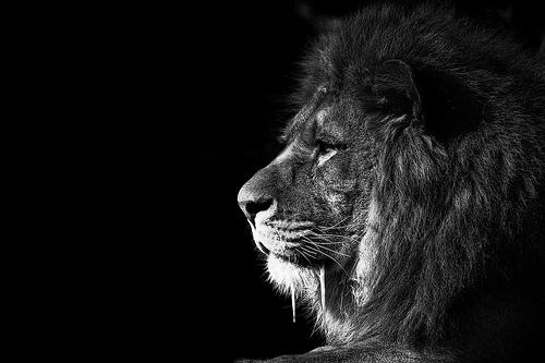 Красивые чёрно белые фотографии